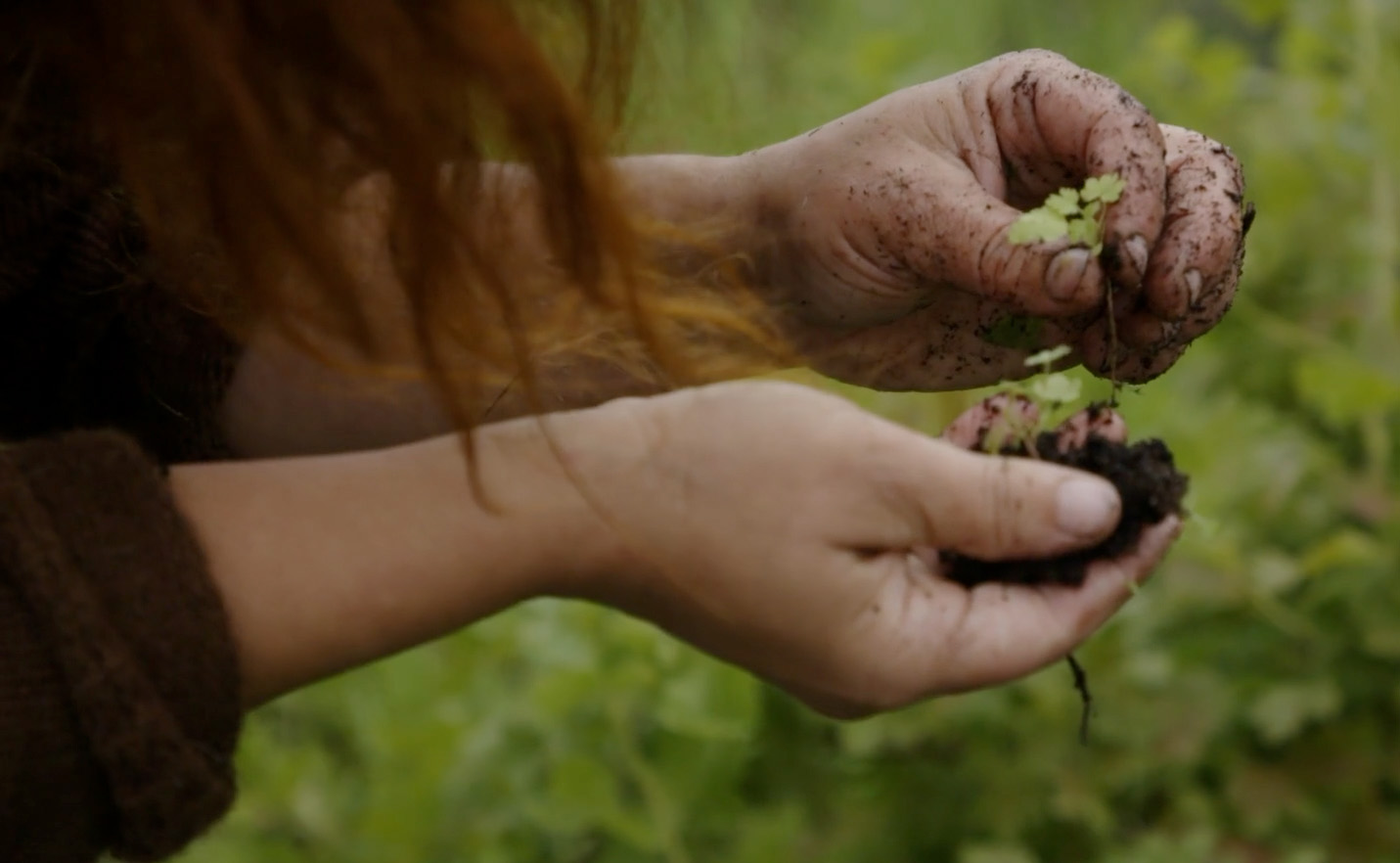 En person holder opp en spire med jord på